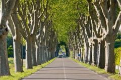 160521_ProvencePfingsten_0790